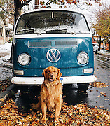 Human Takes His Dog On Epic Adventures, Proves That Dogs Are The Best Travel Buddies<br /> <br /> This is Aspen, a Golden Retriever from Colorado who proves that not only are dogs man's best friends, they also make the best travelling buddies.<br /> Aspen lives in Colorado with Hunter Lawrence, his owner and personal photographer, and whether he's kayaking, hiking, swimming in crystal clear mountain lakes or cruising around in a VW Camper, Aspen loves nothing more than getting back to nature. Except for posing for pictures that is.<br /> Hunter and his wife adopted Aspen when he was just six-weeks old, and since then he's traveled to eight different states. His enviable adventures have earned him a sizable following on Instagram (almost 95 thousand and counting), but he allows his owner to run his account for him so he can spend more time doing what he does best: exploring the Colorado wilderness.<br /> ©Hunter Lawrence/Exclusivepix Media