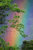Rainbow in tropical rainforest, Sinharaja Forest Reserve, Sri Lanka