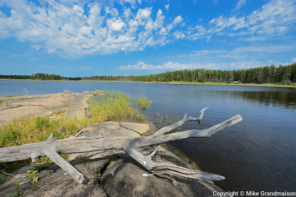 Driftwood along the Bloodvein River<br /> Bloodvein<br /> Manitoba<br /> Canada