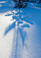 The shadow of a pine tree cast on pristine blanket of snow.  Washington Cascades, USA.