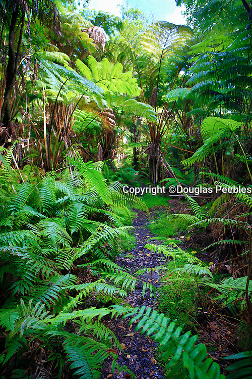 Ola'a Rainforest, HVNP, Big Island Of Hawaii