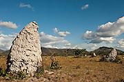 Field of termite mounds,<br /> Savanna,<br /> Rupununi,<br /> Guyana,<br /> South America