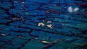 Rice paddies outside Dhaka in Bangladesh.