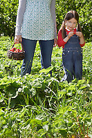 Girl (5-6) with mother (mid section) in strawberry field
