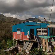 OCTOBER 13 - ADJUNTAS, PUERTO RICO - <br /> Rosana Aviles, 49, nails a FEMA donated blue tarp  on the roof of her parent's hurricane destroyed house in the Barrio Juan Gonzalez after the path of  Hurricane Maria. <br /> (Photo by Angel Valentin/Freelance)