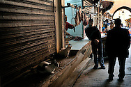 Morocco. Medina in Fez. Cats waiting for the meat from the butcher.