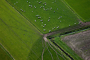 Nederland, Overijssel, Polder Giethoorn, 08-09-2009. Schapen in de Polder Halfweg, omgeving Scheerwolde, sporen van paden in  het land.Sheep in the Polder Halfway, near Scheerwolde, traces of trails in the country.toeslag); aerial photo (additional fee required); .foto Siebe Swart / photo Siebe Swart