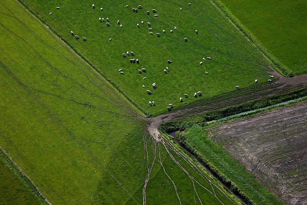 Nederland, Overijssel, Polder Giethoorn, 08-09-2009. Schapen in de Polder Halfweg, omgeving Scheerwolde, sporen van paden in  het land.Sheep in the Polder Halfway, near Scheerwolde, traces of trails in the country.toeslag); aerial photo (additional fee required); .foto Siebe Swart / photo Siebe Swart