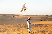 One of UAE's oldest tradition is falconry and it dates to past times. It is not known exactly when falconry emerged but some history mentions assume that it dates back to 2000 years. In the old times falconry started as means to source for food, and it was to hunt hares and houbara mostly. In addition to that it was considered a way of life for leaders of the tribe and the rest of the tribe, it was done in the broad of day light and then later on it was the topic around the evening get-togethers. Furthermore, there was another companion that went hand to hand with falcons, which was the saluki hunting dogs, but saluki in addition to assisting falcons; it was mainly for hunting down gazelles.<br /> <br /> A few might think that falconry is easy as it sounds, actually it is not. It requires a deal of patience, skill and courage to tame, capture and train a falcon. To protect this traditional sport and also to make sure that falcons were treated properly, a number of laws were laid down in sake of preserving this goal. The idea of placing trackers under each falcon skin with a unique identification numbers was established by Emirates Bird Society. This will help a great deal in tracking down the patterns of falcon&rsquo;s migration and will open new possibilities of preserving this unique breed. A few years ago, an idea to issue passports to these birds was undertaken and was aimed at checking the illegal trade of falcons.<br /> <br /> Today, falconry is an endangered branch of Dubai&rsquo;s rich cultural legacy. Rapid urbanization in the UAE over the last few years has adversely affected the natural habitat of the falcons. Moreover, new falconers do not respect the codes of practicing this sport and also indulge in over-hunting. This has posed a threat to these beautiful birds as well as to the cultural offshoot of the game itself.<br /> <br /> In order to preserve this sport for posterity&rsquo;s sake, the UAE government is working in collaboration with UNESCO for imbuing falconry with the status of a cultural her