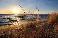 A warm breeze bends the dune grass on the Lake Michigan shore ~ near Grand Haven, Michigan