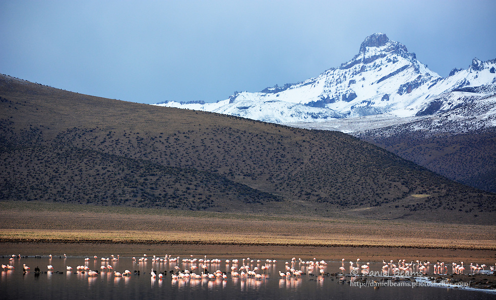 Flamingos in Lago Huayacota, Sajama National Park, Bolivia