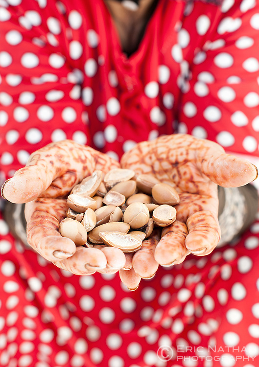 Woman's hands holding argan nuts in Morocco.