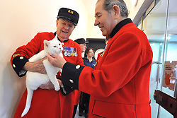 ©London News pictures. 24.02.2011. Chelsea Pensioners meet the Mac the deaf cat at Battersea Dogs and Cats Home. Starting in March, the Chelsea Pensioners will become well acquainted with the dogs and cats at the charity at Battersea Dogs and Cats home, when Battersea walks its dogs across the Thames River to spend time at the Royal Hospital. In turn, the charity will invite the veteran British Army soldiers in to interact with the many animals it takes in every year. Picture Credit should read Stephen Simpson/LNP