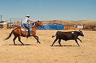 Wilsall Ranch Rodeo, Montana, Ranch Horse Competition, David Fryer, North Fork Raiders Team, MODEL RELEASED, PROPERTY RELEASED horse & rider