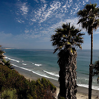 Palm trees along the coast of Encinitas, California, 2009.