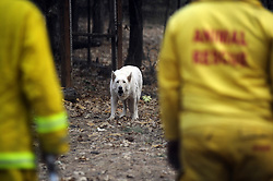 November 18, 2018 - Magalia, California, USA - Archer made a point of returning to this house where two dogs were sheltering in place because the drive down the dirt road in coming days would be more difficult if it rains. Only one of the dogs was found. (Credit Image: © Neal Waters/ZUMA Wire)