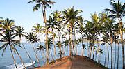 Tropical scenery of palm trees on a hillside by blue ocean, Mirissa, Sri Lanka, Asia