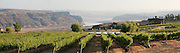 A panoramic view of Cave B winery, vineyards, and resort overlooking the Columbia River, Quincy, Washington