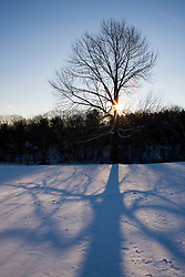 A maple tree and its shadow in the snow in winter in Troy, New Hampshire.