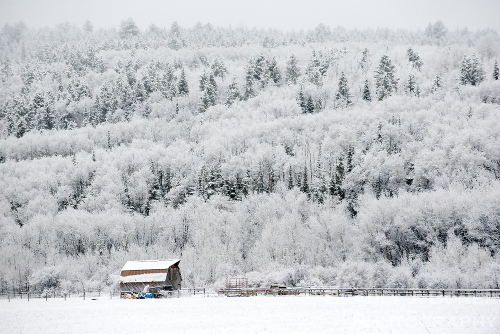 A barn and trees on a hillside just outside Victor, Idaho, sit under a fresh blanket of snow Tuesday morning. The extended forecast calls for more rain and snow for Jackson Hole and the surrounding region.