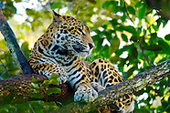 Belize Zoo