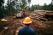 CHILDERSBURG, AL – AUGUST 3, 2018: Workers prepare for the final harvest of Loblolly Pine on a tract located 50 miles outside of Birmingham. <br />