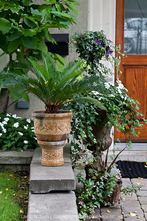 Annual flowers, tropical plants, perennials and shrubs in containers and urns in a front yard garden.