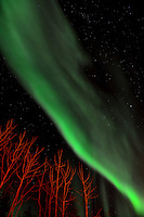 Northern lights in the sky over Whitehorse, Yukon, Canada