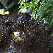People riding through the mud on a quad bike course near Taupo with Taupo Quad Bikes. Taupo, New Zealand. 7th January 2011. Photo Tim Clayton.