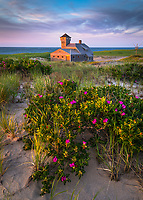 June was the perfect time to visit the Cape, as the beach rose was at peak and the light was glorious! I really enjoyed visiting this historic lifesaving station near Race Point in Provincetown.