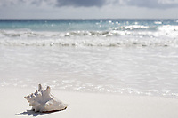 view of the beautiful white sand beach of tulum in yucatan mexico with a shell in the foreground