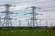 Electrical pylons coming from Dungeness B power station in the Romney Marsh, Kent, United Kingdom. Grazing below the pylons is a herd of Romney sheep, who are native to the marshland.  (photo by Andrew Aitchison / In pictures via Getty Images)