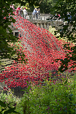 "Yorkshire Sculpture Park Poppies ""The Wave"""