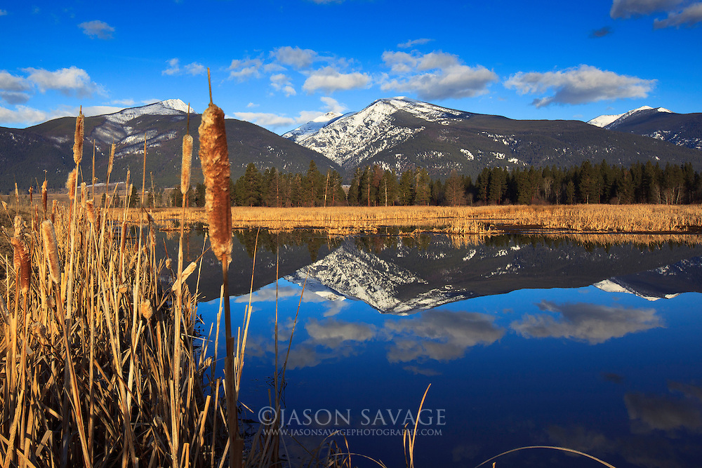 Early spring at Lee Metcalf Wildlife Refuge, Montana.