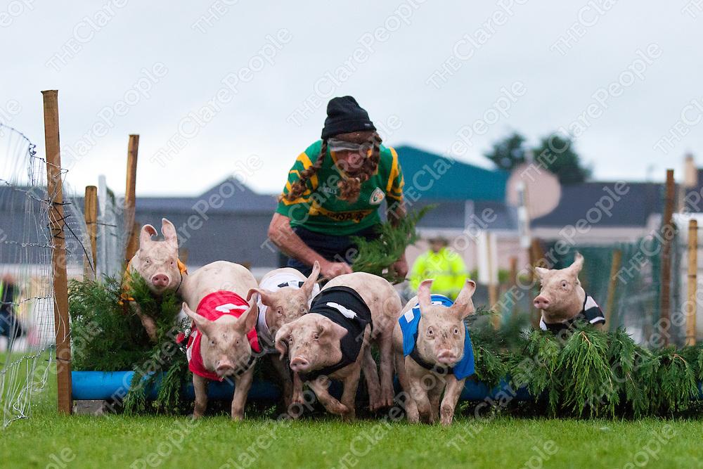 Kilmihil Festival of Fun Pig Racing 2015
