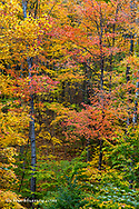 Hills are filled with autumn colors at Brown County State Park near Nashville, Indiana, USA