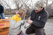 Student banding wood duck with biologist Ben Sedinger, Churchill County, Nevada