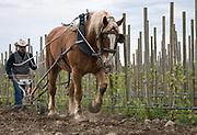 Horsepower, Walla Walla AVA, Milton-Freewater, Oregon