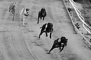 160513 Greyhound racing feature