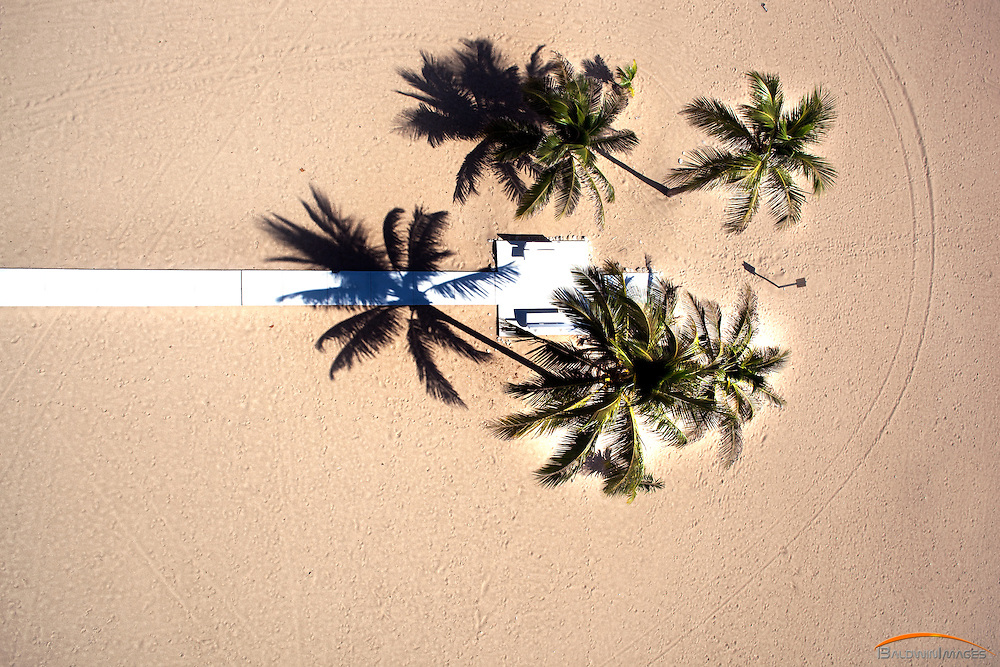 Aerial vertical view of Palm trees casting afternoon shadows on beach and walkway to ocean