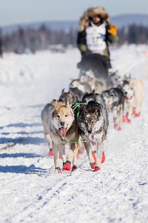 Musher Rick Casillo competing in the 45rd Iditarod Trail Sled Dog Race on the Chena River after leaving the restart in Fairbanks in Interior Alaska.  Afternoon. Winter.