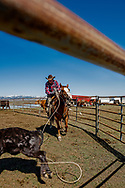 Lyle Woosley, 79 yrs, heels calf to drag to fire, helping neighbor,  Hamm Ranch, branding, Wilsall, MT