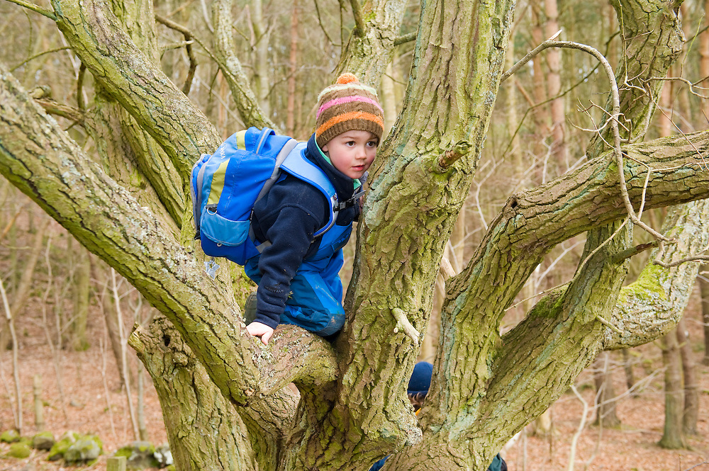 A young boy tree climbing, The Secret Garden, Fife