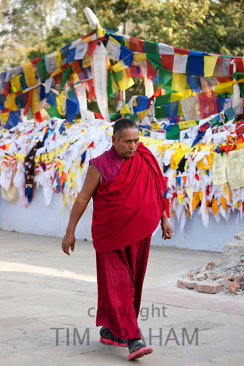 Buddhist monk passes prayer flags at Mulagandhakuti Vihara Temple at Sarnath near Varanasi, Benares, Northern India