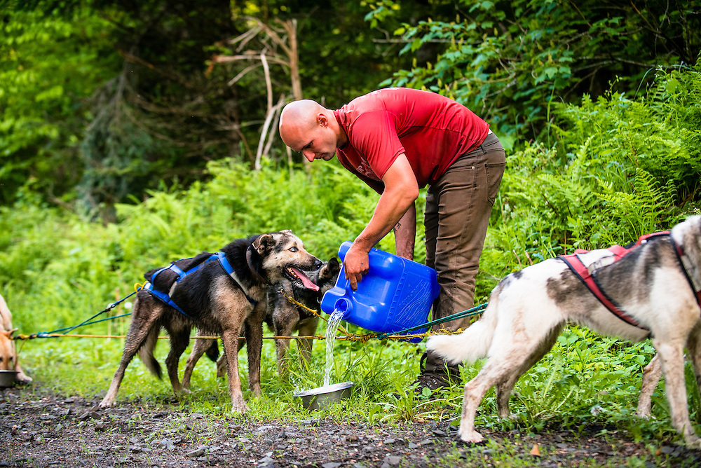 Rehydrating the dogs during a summer dog sledding session in the White Mountains, NH