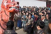 Pendant les quinze jours des célébrations de Monlam Chenmo au monastère de Labrang (Gansu, Chine), la tradition du lion des neige veut qu'il attaque fictivement (ou presque) la foule. En retour, toucher la tête du lion procure une protection pour l'année. [ENG] During the celebrations of Monlam chenmo , the Gelukpa religiuous new year, a paper-made Snow Lion is charging toward the crowd . This tradition brings luck to those who touch the head of the Lion.