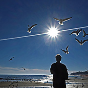 Bay St. Louis, Mississippi -  Photo by David Peterson - a man feeds sea gulls on the beach in Bay St. Louis Mississippi.