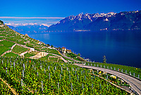 Vineyards along Lake Geneva (near Montreux), Switzerland