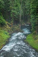 McKenzie River below Koosha Falls, Cascade Range Oregon