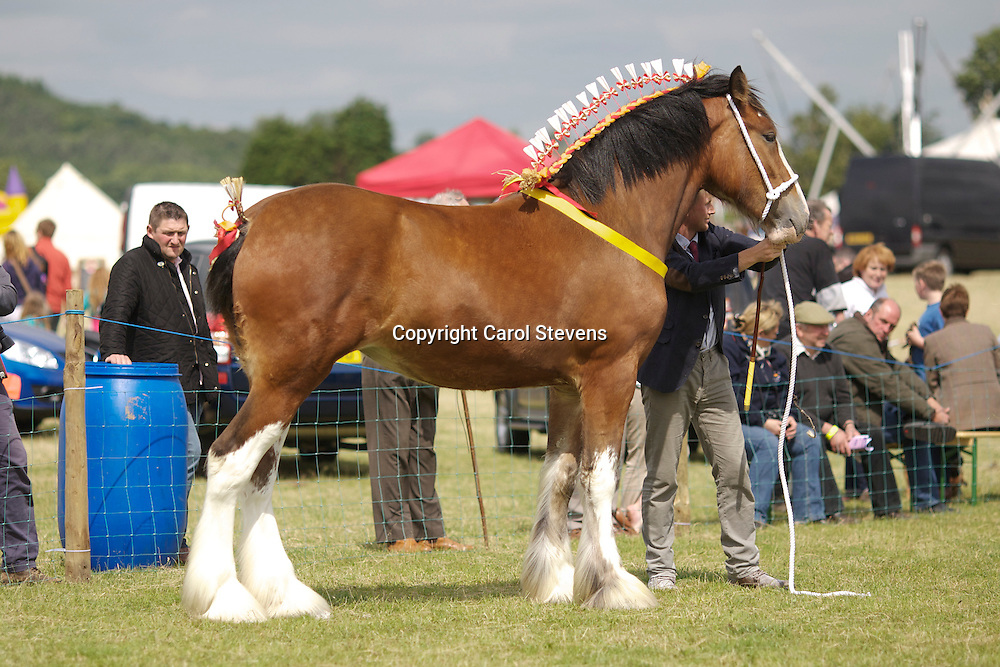 Mr R Bedford's Bay Filly  Hartcliff Rihanna  f 2011<br />